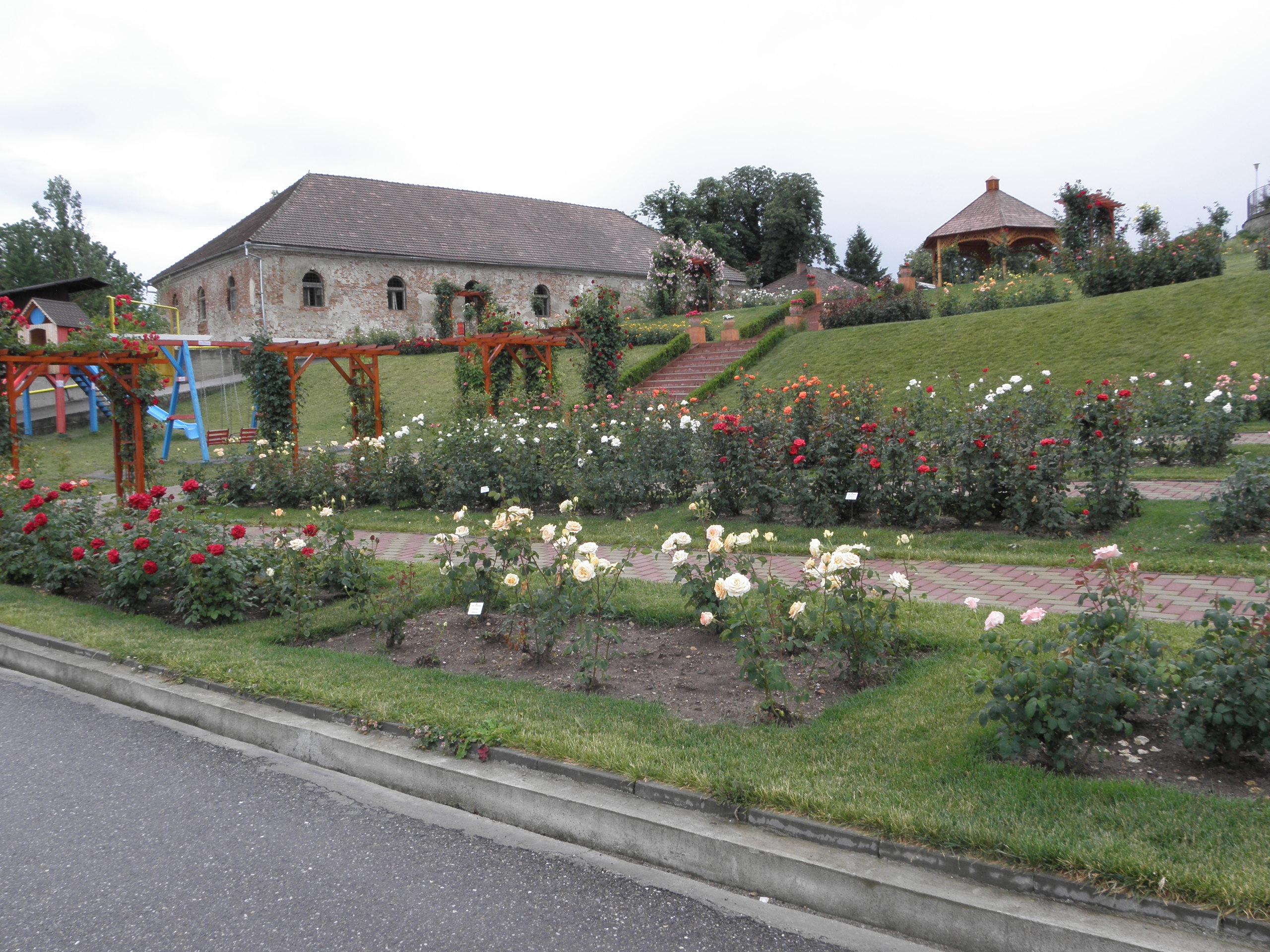 Rózsa kert Zsibón